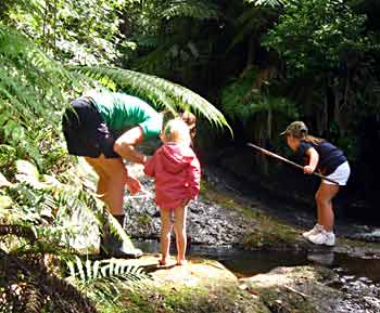 Bradley family enjoys Mill Stream – looking for koura and other wildlife